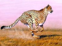 Cheetah Test